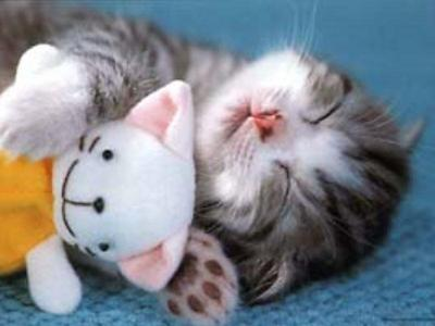 out of 10 how cute is this kitten?