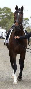 How pretty do あなた think this horse is out of 10? Post a picture of the horse あなた think is prettiest in the world.
