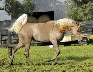 What name do u think would suit this horse?
