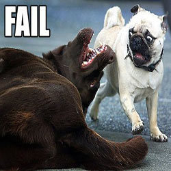 This pug is so scared. :D