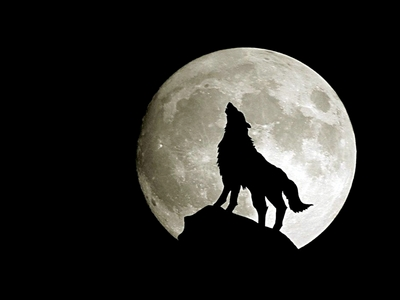 Werewolves, totally! They can rip a vampire apart like there's no tomorrow oh and they also have a soul. I like having a soul, so if I had a choice, I would say werewolf all the way. I get to be powerful without having to turn into a souless, cold blooded creep.