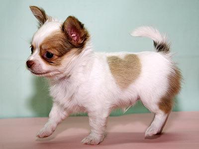 oh puppy upendo