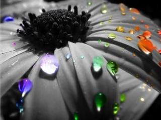 bahaghari Flowers!