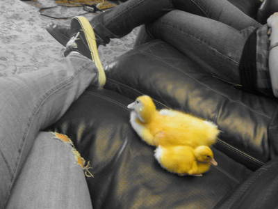 how cute are these ducks....