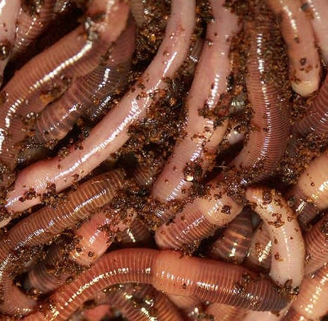 worms im really really scared of them..........