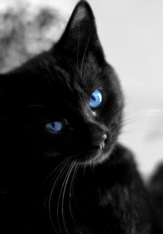 i would be in thunderclan. in my mind, firestar is SOOOOO cute!and i meen boy cute not baby cute.those green eyes staring into my soul...anyways, my name would be Starkit. then Starpaw, Starblossom, and finally, if i ever got lucky enough to be leader, Star. i would be a black cat with a white tail tip, white paws, and two white stripes on my back.and blue eyes that twinkle in the moon light.