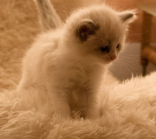 This is my veryy cute animal u guys will go crazyy x !!! :)its a tiny kittyy