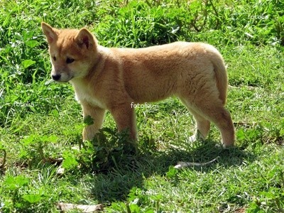 do Ты think its cute, cuz i do :P (oh BTW its an australian dingo)