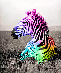 pelangi, rainbow zebra, kuda belang of course ! jelly, jeli Beans & jelly, jeli kacang Cars suck.