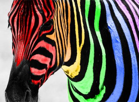 How about a lovely bahaghari Zebra? :D