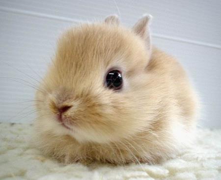Isn't he cute または what?