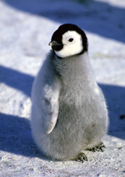 HAPPY BIRTHDAY!!!! enjoy the pingüino, pingüino de x)