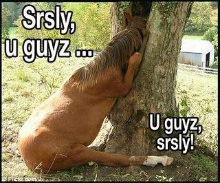 Um...a horse?