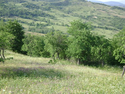 an image of my favourite place in the whole world. it's a place in Romania called Slanic Prahova and...well, it's exactly how i imagine heaven. i am obviously a little biased but -anyway- it is a great place to relax and enjoy living.