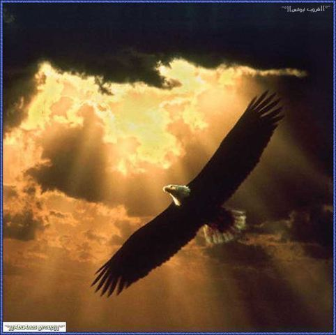 I would want to be an eagle, the most majestic bird. I want to fly, had dreams of flying!