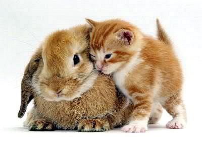 Kitty hugs bunny!