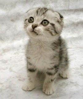 OMG this kitty make me wanna cry!!!!!!!!!!!!!!!!!!!!!!!!!!!!!!!!!!!!!!!!!!! awwwwwwwwwwwwwwwwwwwwwwww!!!!