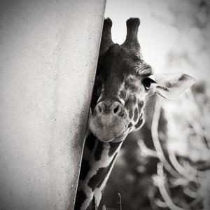 Peek-a-boo I see you ;)