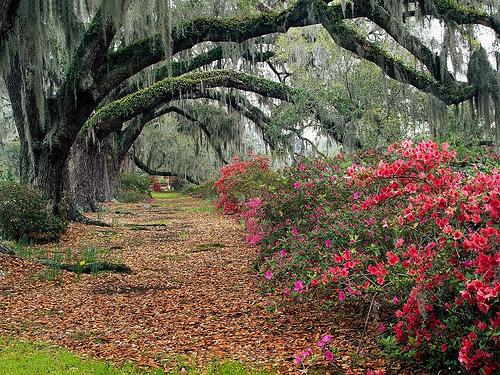 Near Charleston in South Carolina.