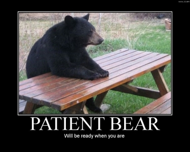Why can't all bears be this civilized?