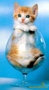 So adorable!!! =)