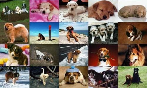 DOGS!!!!!!! YUCK :S and by the way Собаки hate me too.