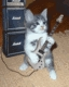 LOL he totally is... must b in the same band as this kitty... ;)
