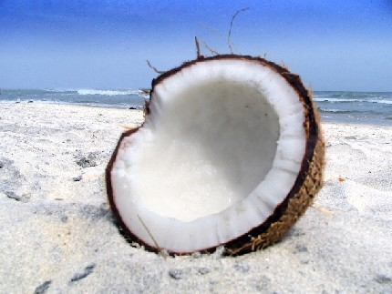 COCONUTS!!!! Feel bad for me,, I saw distubing images while looking for a picture o.O;