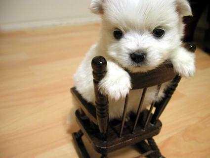 very very VERY cute