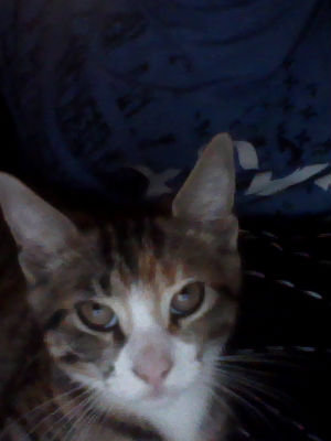 my boyfriend. my pets me (jk, I suck! LOL) Role Playing Video Games :3 Music!!!! (my kitty-cat Dash ^_^)