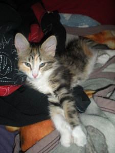 I can't choose. Mainly because there are so many different names and I get them mixed up. I like some one Tag then I never see them again. So I say myself, Luvweezy7 and my best friend Eminemaddict09. And here's my kitty!! :)