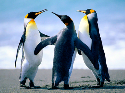 I'd soooo press it. I mean,just look at it! It's all mysterious..so tempting!!! the penguins have nothing to do w/ it..they just look cute.