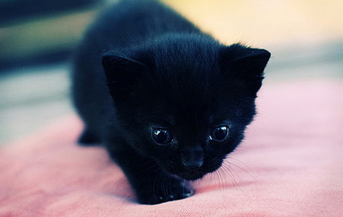 BLACK KITTY!! <3<3