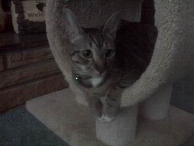 This is a picture of my aunt's cat Hunter :)