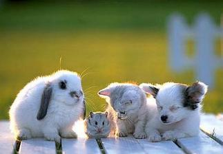 I want all of them :( Especially the kitty and puppy...:D