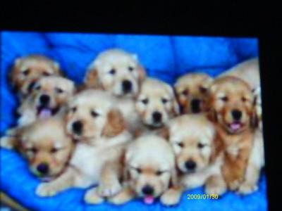 i cant pick i প্রণয় all puppies!!!!!!!!!!! im a কুকুরছানা lover!!!