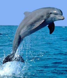 Hmmmmmmmmmm.......Dolphin....