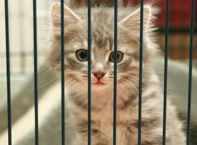 A Place to but a kitten?? u gotta be kitting me?? Theirs thousand of Katzen waiting for u in the shelters begging Du to take them out of there because they want to live!!!!!