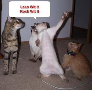 How about some funny cats? ^_^