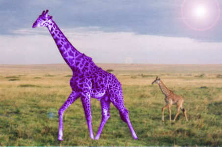 I like giraffes. And i like the color purple. :)
