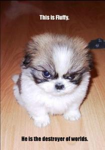 Oh Fluffy..