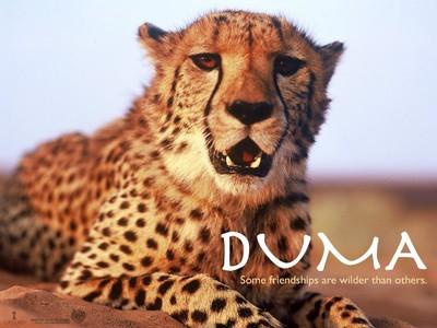 ummm I need to speak to the DUma fans!!!