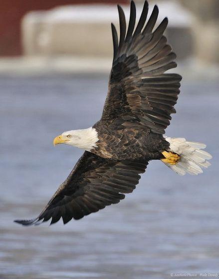 an eagle flys.......