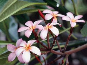 flores ^^