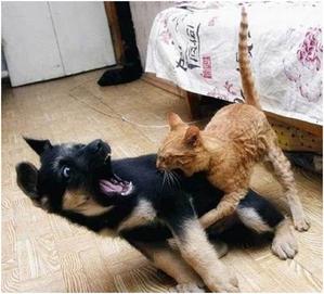 Fight like Katzen and dogs.