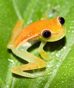 baby क्रिस्मस frog