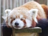1.) Sleeping.
