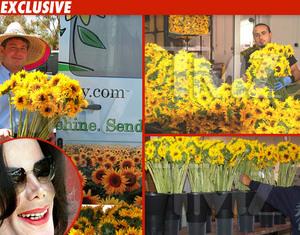 TMZ sunflowers