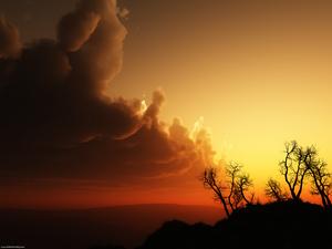 Dawnclan sigh at night