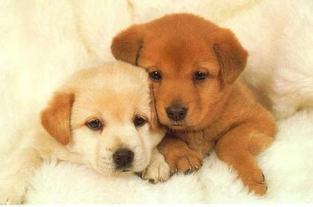 True TPB likes adorable cachorrinhos like these!